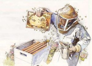 Beekeeping-Clipart